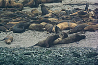 Sea Lions & Seals, a lazy morning